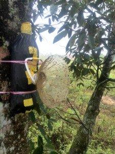 malaysia-bee-26