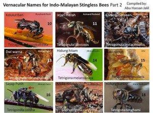 malaysia-stingless bee